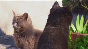 2 кота греются в солнце сток-видео