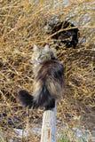 2 кота играя в саде Стоковое Изображение