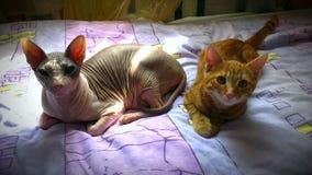 2 кота лежат совместно стоковые изображения rf