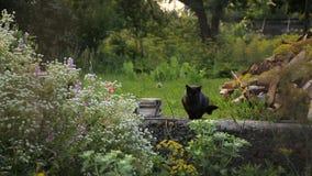 2 кота на задворк домочадца coutryside сток-видео