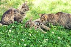 3 кота на траве Стоковая Фотография
