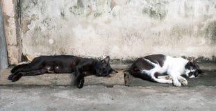 2 кота положенного на пол Стоковое Изображение RF