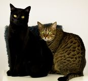 2 кота представляя перед объективом стоковое фото rf
