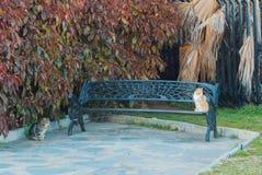 2 кота сидя на металле выковали стенд в парке mediterr Стоковое фото RF