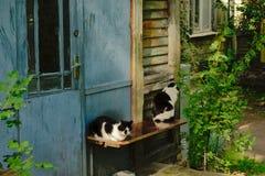 2 кота сидя рядом с дверью старого деревянного дома в Liepaja - catus кошки Стоковые Изображения