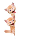 2 кота, смеясь над и развевая Стоковое фото RF