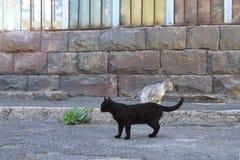 2 кота улицы, Ереван, Армения стоковые фотографии rf