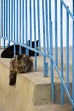 2 кота черной и пестротканой расцветки отдыхают стоковая фотография
