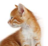 котенка красный цвет довольно Стоковая Фотография RF