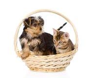 Котенок Бенгалии и щенок йоркширского терьера сидя в корзине изолировано Стоковое фото RF