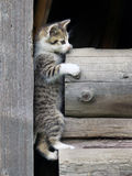 Котенок взбираясь на штабелированной древесине Стоковые Изображения RF