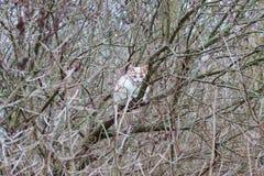 Котенок высокий на ветви дерева Кот звероловства стоковая фотография