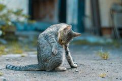 Котенок в дворе перед входом стоковое изображение rf