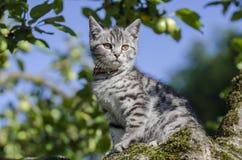Котенок в дереве Стоковые Фото