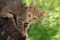 Котенок в дереве Стоковые Фотографии RF