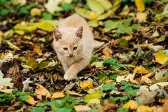 Котенок в лесе Стоковое Изображение RF