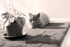 Котенок в комнате Стоковое Фото