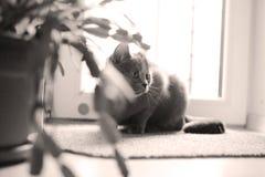 Котенок в комнате Стоковое Изображение