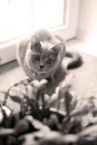Котенок в комнате Стоковые Фотографии RF
