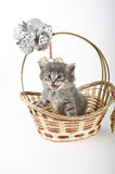 Котенок в корзине Стоковое фото RF