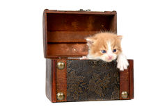 Котенок в коробке Стоковые Изображения