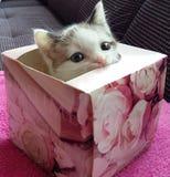 Котенок в коробке Стоковое фото RF