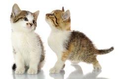 Котенок в подарочной коробке Стоковые Изображения RF