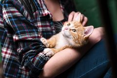 Котенок в руках девушек стоковое изображение