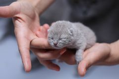 Котенок в руках женщины Стоковые Фото