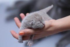 Котенок в руках женщины Стоковое Фото