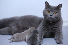 Котенок в руках женщины Стоковые Изображения RF
