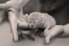 Котенок в руках женщины Стоковые Изображения