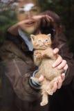 Котенок в руках Стоковые Изображения RF