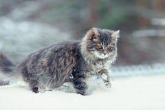 Котенок в снеге Стоковые Фотографии RF