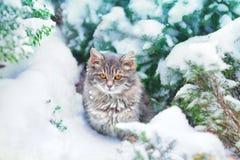Котенок в снеге стоковая фотография rf