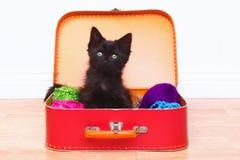 Котенок в случае заполненном с пряжей Стоковое Изображение