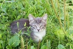 Котенок в траве на летний день стоковая фотография