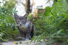 Котенок в траве на летний день стоковые изображения rf