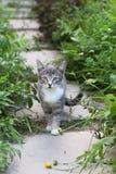 Котенок в траве на летний день стоковая фотография rf