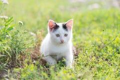 Котенок в траве Стоковая Фотография