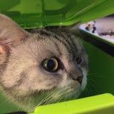 Котенок в ящике Стоковая Фотография