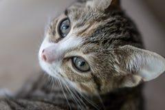 Котенок детенышей Possing Стоковое фото RF
