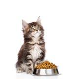 Котенок енота Мейна сидя с шаром сухих кошачьей еды и lookin Стоковые Фотографии RF