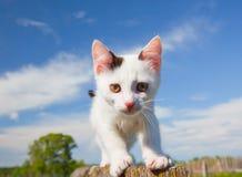 котенок загородки Стоковые Изображения RF
