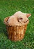 котенок застенчивый стоковые фото