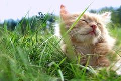 котенок зеленого цвета травы Стоковые Изображения RF