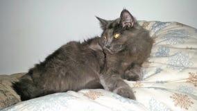 Котенок зимы Стоковые Изображения RF