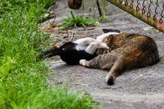 Котенок играл с котом весело как предпосылка стоковые фотографии rf