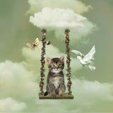 Котенок играя в небе Стоковые Изображения RF