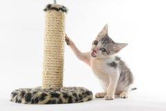 Котенок играя на шабере стоковые фотографии rf